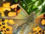 farfalle città: Ecco come aiutarle!