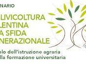 L'olivicoltura salentina sfida generazionale