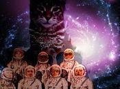 """Fratelli Stellari sito Come Gatto"""""""