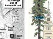Hyperion, l'albero alto mondo