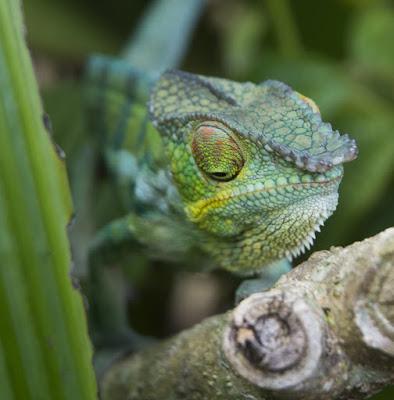 Taste of Madagascar 3