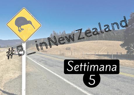 #B_inNewZealand – Settimana 5
