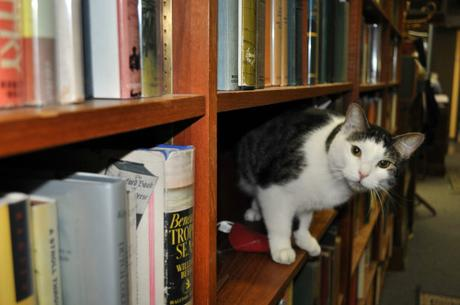 You know, cats&books…