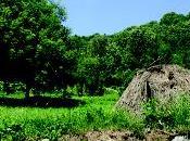 Taipana terreni incolti recupero Tipani oživljajo zapuščena zemljišča