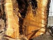 #Buccinasco: Perché abbattiamo alberi?