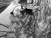 tanyaluca:Four Seasons Puddle… Frantumi specchio...