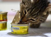 Gourmet Gold Tortini: delizia palato miei gatti