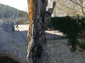 """Ancora volta fiamme l'albero """"sacro"""" Michele pochi metri Santuario UNESCO"""
