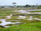 laguna Songor