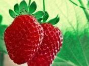 Fragolosa 2017: torna Cassina Pecchi sagra delle fragole