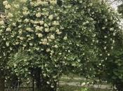 #fioridivenerdì- seduta sulla panchina osservare giardino