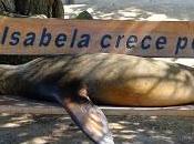 Galapagos: Isabela