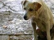 NoRandagismoDAY, maggio nelle piazze pugliesi sensibilizzare tema della tutela degli animali