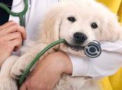 responsabilità civile veterinario