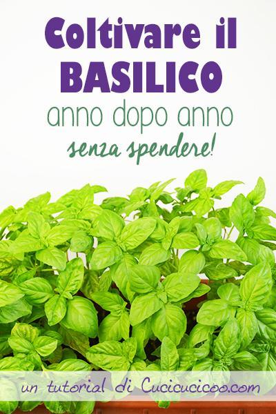 Coltivare basilico anno dopo anno senza spendere paperblog for Coltivare il basilico