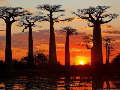 Tip per il Madagascar