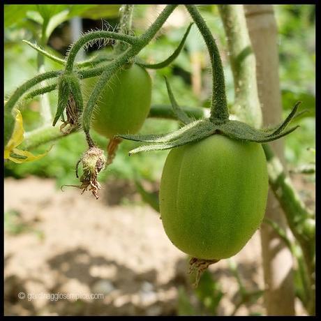 I primi pomodoro