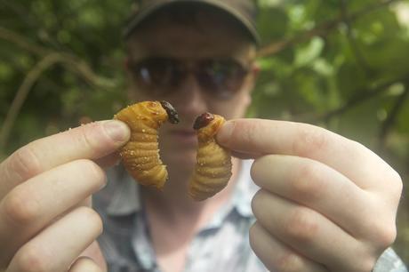 Quali saranno gli insetti che mangeremo nel prossimo futuro? Ce lo spiega Bugs, il documentario di  Andreas Johnsen, dal 29 Maggio al cinema