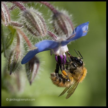 Sulle foto agli insetti impollinatori