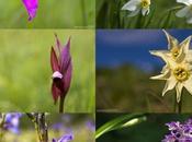 Flora tutelare