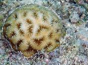 Coralli: salvezza viene laboratori ricerca!