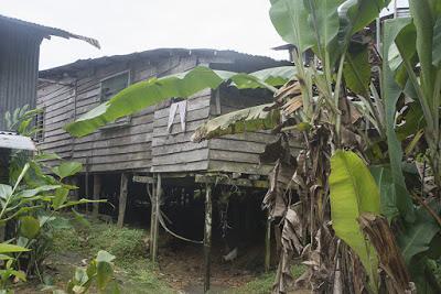 Malaysia 32 -  Nella terra degli Iban, i Dayaki del mare