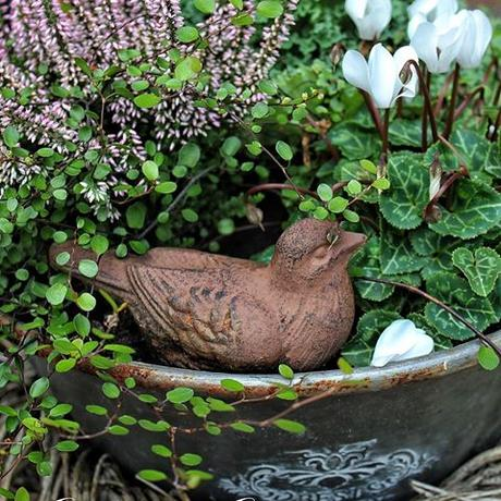 Say hello, little birdie  Ik hoop jullie hebben even tijd om te relaxen. Fijne avond iedereen!  Bei uns herrscht noch immer vorweihnachtlicher Trubel. Ich hoffe, bald kann ich auch aufatmen. Macht es Euch gemütlich heute Abend  #landelijketuin #landelijkesfeer #landliebe #landelijkestijl #tuin #landliebe #landliv  #mycountrycottage #countrycottage #instaflowers #instaflowers #instagarden #mycottageinstincts #countrygarden #heart_imprint #garden #garten #mygatheredgarden #autumngarden #all_gardens  #herbstdeko #hydrangea #hortensien #weisseblumen #whitelove #muehlenbeckia #birdie #alpenveilchen #rusticlove
