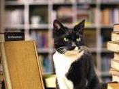 Recensione: Leggere faccenda gatti