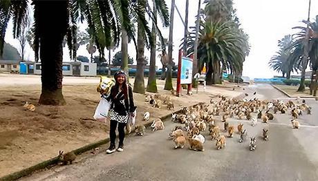 Okunoshima  l'isola dei conigli