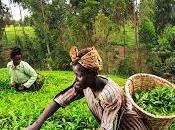 fame faccenda donne