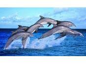 delfino, gioioso capolavoro della natura
