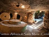 Archeologia alimentazione. Ulivi olio Sardegna, quando risale coltivazione delle piante produzione nettare verde? Giandomenico Scanu