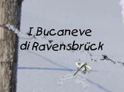 """Bucaneve Ravensbrück"""" Anna Laura Cittadino: evoluzione animica dell'amore oltre vita."""
