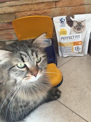 #Perfectfitcat a prova di Oliver !