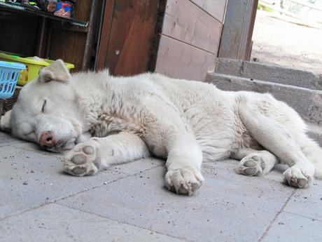 Centinaia di cani randagi sardi in adozione in Germania: il web si mobilita - BlogoSocial