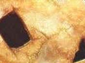 Archeologia. Crani umani incisi Göbekli Tepe: nuovo culto neolitico?