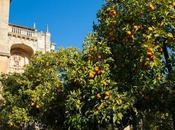 Cosa fare vedere Cordoba, culture cuore dell'Andalusia