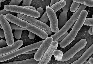 I MICROBI MANGIA-PETROLIO