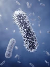 I probiotici aiutano nei disturbi gastro-intestinali e nella depressione