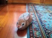 coniglio birichino