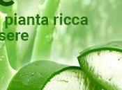 Sorgente Natura. Scopri pianta magica! Aloe