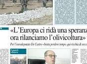 proposta rilancio dell'olivicoltura Salento leccese