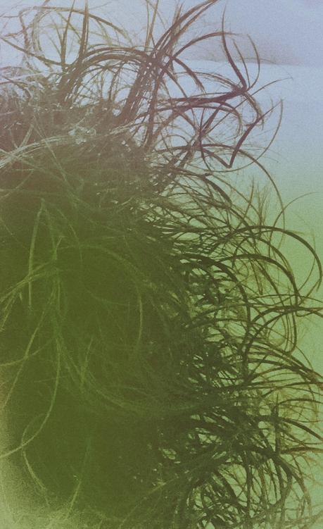 Il geroglifico quasi sott'acqua della signora Zott│V.S.Gaudio