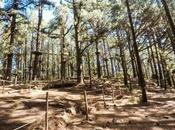 Forestal Park, giornata alberi