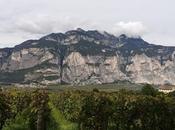PIANA ROTALIANA vino panorami