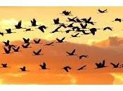 vespero migrar