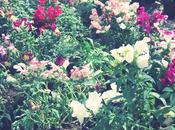 Diary|Flowers