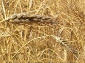 Saragolla grano antico macinato pietra pasta fresca
