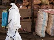 Peste polmonare Madagascar contributo dispensari cattolici