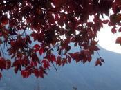 """colore """"rosso autunno"""" nella frazione Coatesa (Comune Nesso Lago Como), ottobre 2017"""